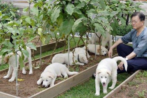 Президент Південної Кореї запропонував заборонити їсти собак