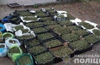 В Запорожской области изъяли партию марихуаны на сумму более 20 млн гривен