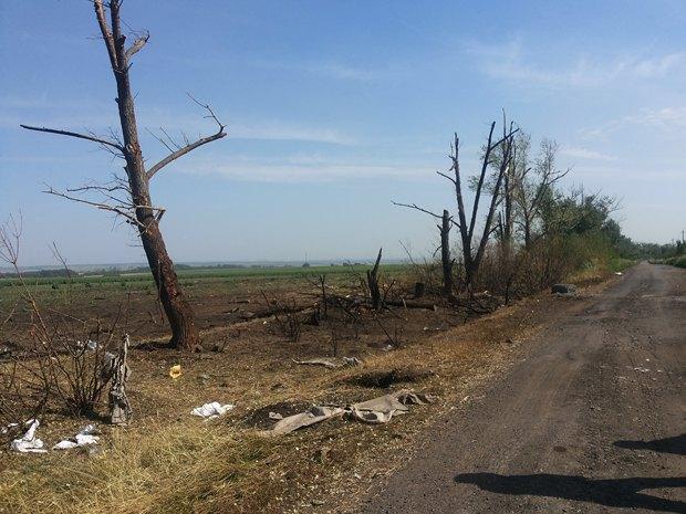 Деревья в районе взрыва
