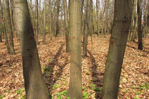 Кабмін заборонив санітарне вирубування лісів