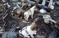 Військові просять забрати народжених в АТО собак з Пісків