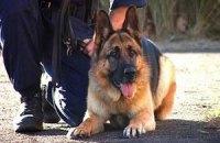 Арбузова охоронятимуть із собаками