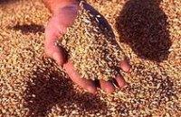 Судьба будущего урожая в Днепропетровской области пока не вызывает опасений