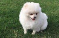 НАПК попросило суд конфисковать собаку у одного из руководителей Нацполиции