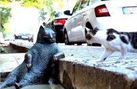 В Стамбуле установили памятник задумчивому коту