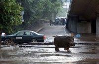 Пострадавший от наводнения зоопарк Тбилиси получит более 100 животных