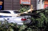 В Ужгороде ураган повалил деревья и разбил автомобили