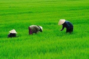 Влада В'єтнаму захоплює землю