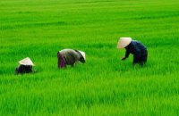 Власти Вьетнама захватывают землю