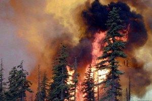 Площа лісових пожеж у Сибіру зростає