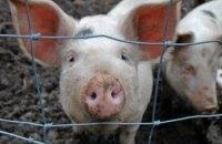 Білорусь скасувала дозволи на ввезення свинини з Львівської області через африканську чуму
