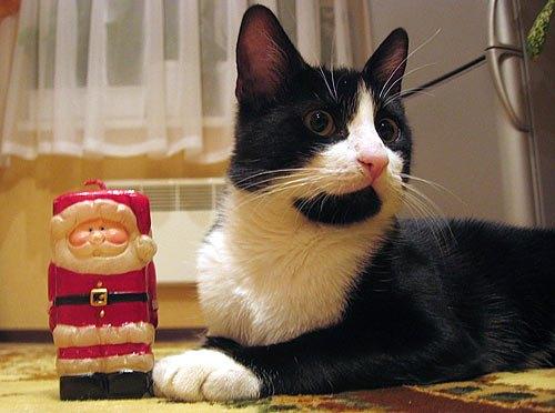 Фикус превратился в грациозного кота