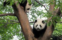 Пятничная панда #42