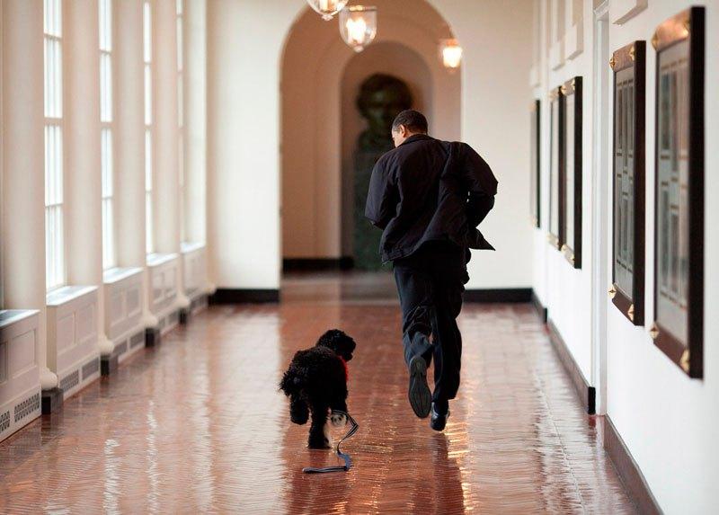 Барак Обама с собакой в одном из коридоров Белого дома. 15 марта 2009 года