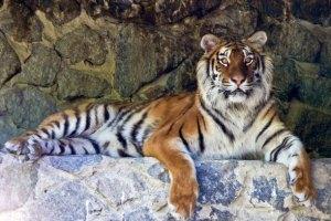 У Киевского зоопарка нет денег на новых животных, - директор