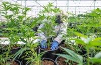В Раде зарегистрировали законопроект о легализации медицинского каннабиса
