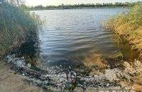 На Луганщині виявили масовий мор риби