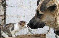 В Днепродзержинске в 2013 году откроют приют для бездомных животных