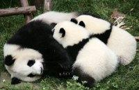 Пятничная панда #137