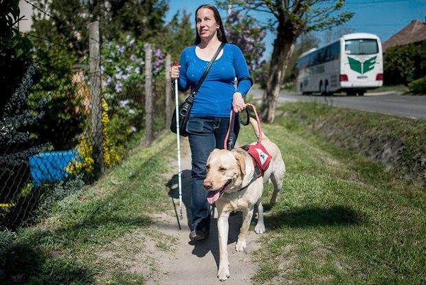 Борс ведет свою хозяйку Энику по улице родного города Орботян, Венгрия, 22 апреля 2016 года. Собака-поводырь помогает женщине с 2013 года.