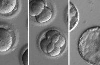 Учені виправили ген людського ембріона