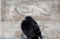 Ученые научили голубей работать с планшетами
