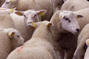 Ударом молнии в Китае убило более 170 овец
