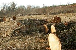В Киевской области незаконно рубят лес