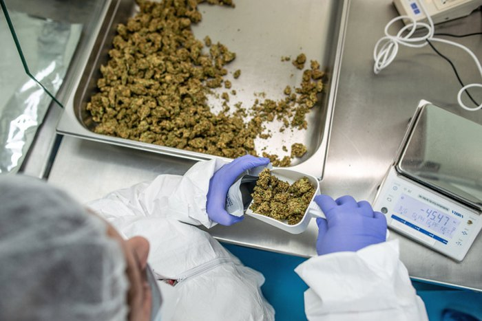 Упаковка медичного канабісу на заводі з вирощування та переробці канабісу Pharma Revadim, Лод, Ізраїль, 23 січня 2019.