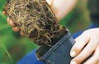 Киевские деревья защитят от соли пленкой