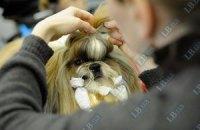В Херсоне собакам запретили лаять после 22.00