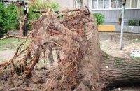 Ураган из Румынии оставил без света 477 населенных пунктов в Западной Украине