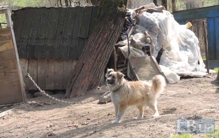 Садиба служки охороняється собакою