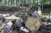 Киевсовет разрешил вырубить часть Беличанского леса ради дороги