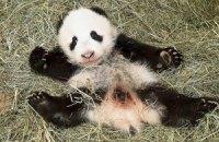 Пятничная панда #168