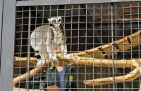 Из Черкасского зоопарка украли лемура