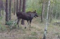 На кордоні з Польщею прикордонники знайшли імітатори слідів лося