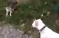 Харьковскую студентку отчислили из колледжа за видео с убийством котенка