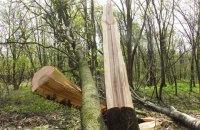 В Голосеевском парке в Киеве за ночь вырезали более сотни деревьев