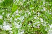 Июньская непогода уничтожила овощи и ягоды на 300 млн грн