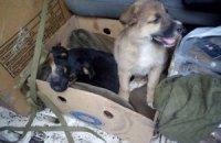 9 собак из зоны АТО нашли новых хозяев после публикации на LB.ua
