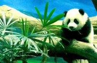 Пятничная панда #174