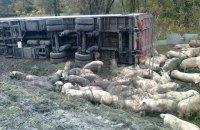В Полтавской области в ДТП погибли 50 свиней