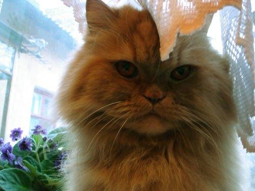 Кот Илюша читателя Lb.ua Александра Никоненко. Живет в г.Запорожье. Умный,красивый,добрый,наглый. В общем наш любимец.