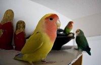 """Бразильская полиция конфисковала у наркоторговцев попугая-сообщника, который """"стоял на шухере"""""""