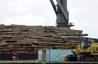 НАБУ затримало ексдиректора Гутянського лісгоспу за розтрату деревини на 50 млн гривень
