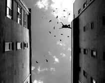 В Запорожской области девушка выбросилась с 5-го этажа на родителей
