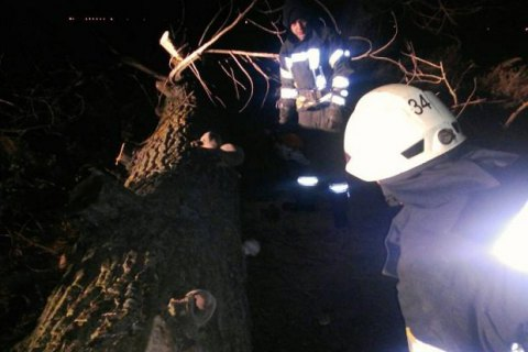 В Киевской области из-за падения дерева погибла женщина