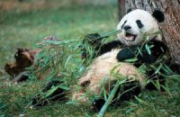 Пятничная панда #163