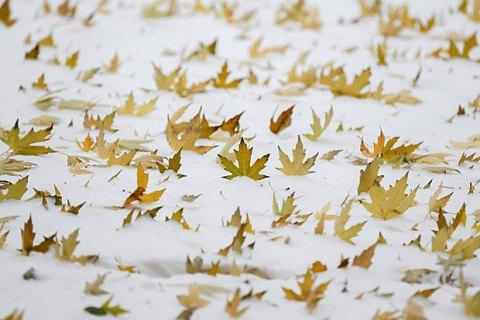 Коли в Україні припиняться снігопади: прогноз